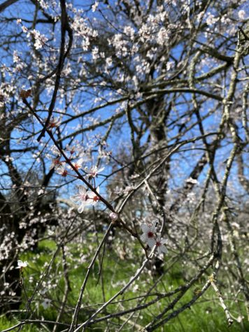 Allergies Increase with Climate Change